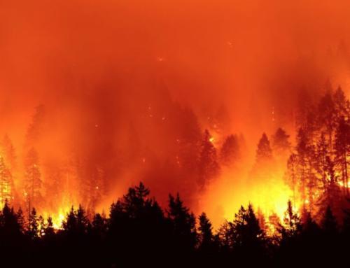 Deforestation: I'm Burnin' for You?!